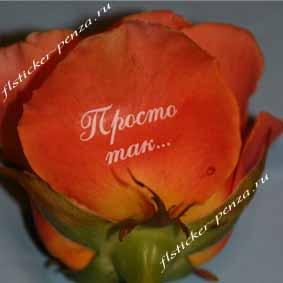 Поздравления на цветах красиво